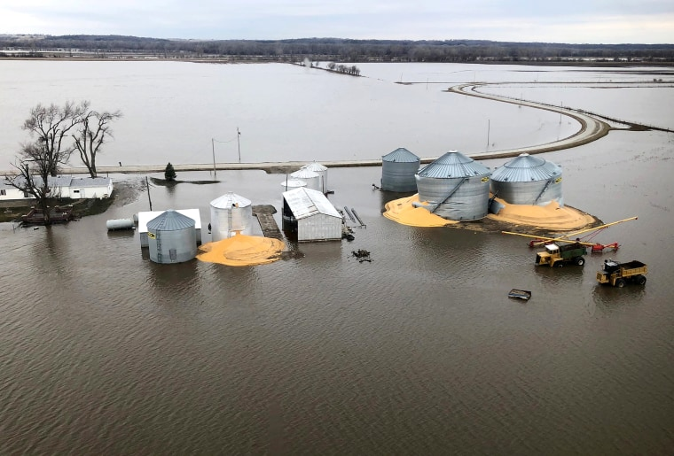 Image: FILE PHOTO: The contents of grain silos which burst from flood damage are shown in Fremont County, Iowa