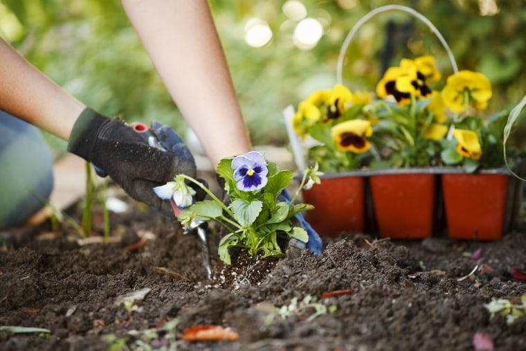 Image: Gardening Hands