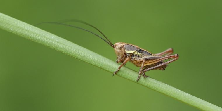 Bug Traps