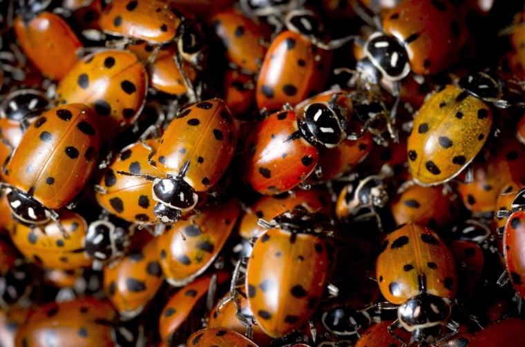 Ladybug swarm detected by weather radar over Southern California