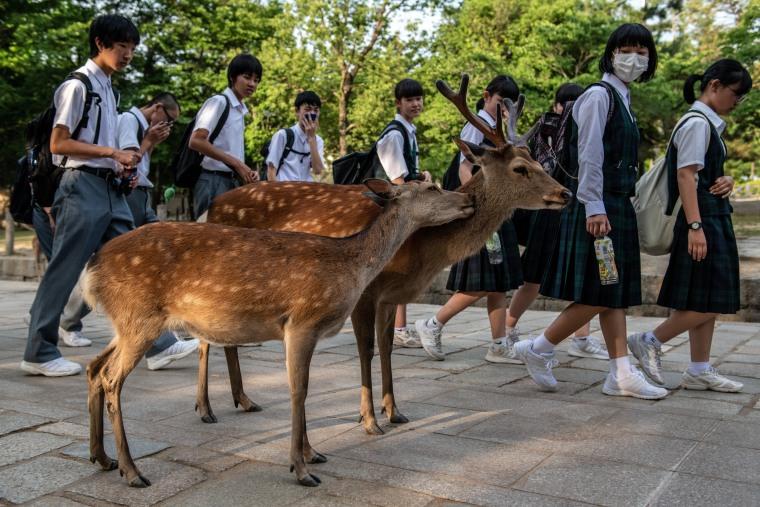 Image: Nara's Wild Deer