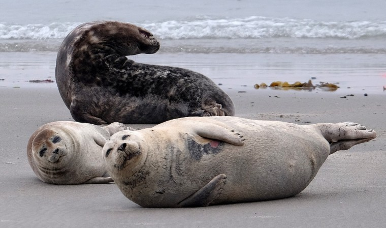 Image: GERMANY-ANIMALS-SEALS