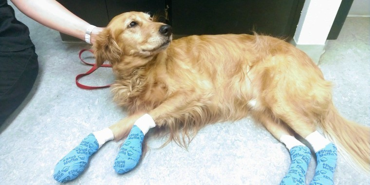 Dog has bloody paw injury: 'Hot weather means hot pavement!'