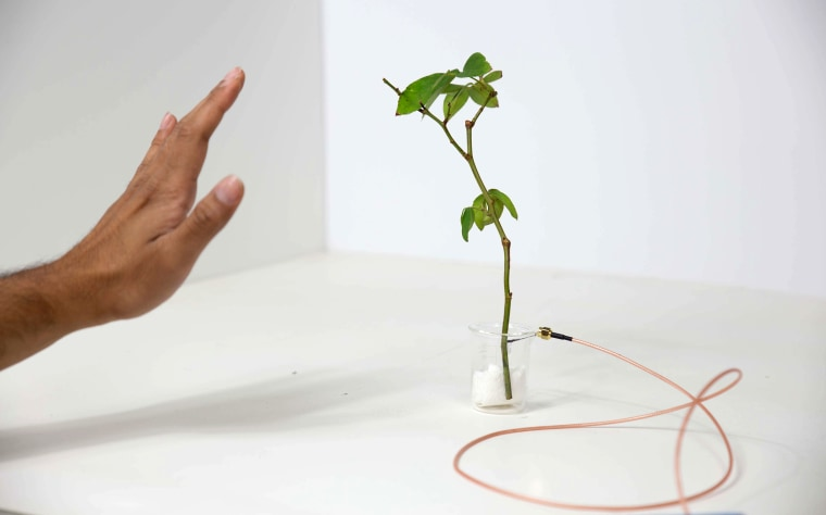 Image: Planta Digitalis, Plants as Antennas, Motion Sensors and more.
