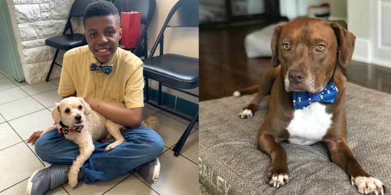 Meet the 12-year-old boy who designs bow ties to help shelter pets get adopted