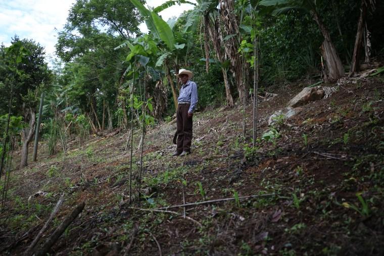 Tanerjo de Leon stands among his coffee plants in Tizamarte, Guatemala.