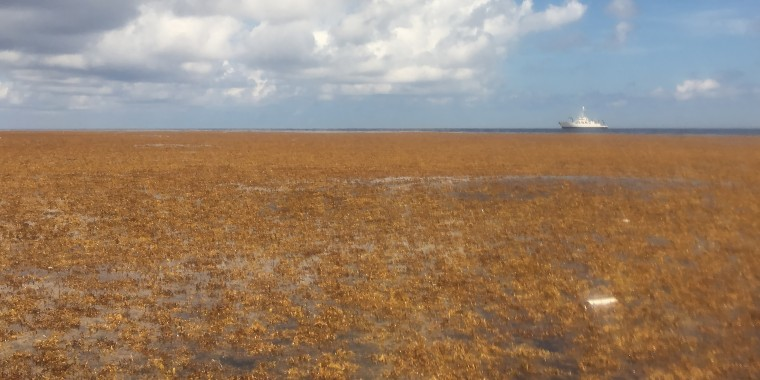 A Sargassum bloom in the Atlantic Ocean on June 4, 2019.
