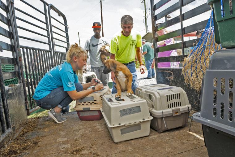 Image: Tropical Storm Barry animal evacuations