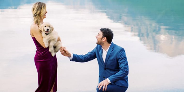 Golden retriever puppy makes marriage proposal picture-perfect