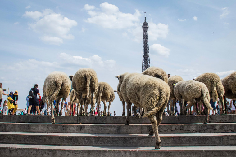Image: FRANCE-FARMING-AGRICULTURE-CITY-SHEEP