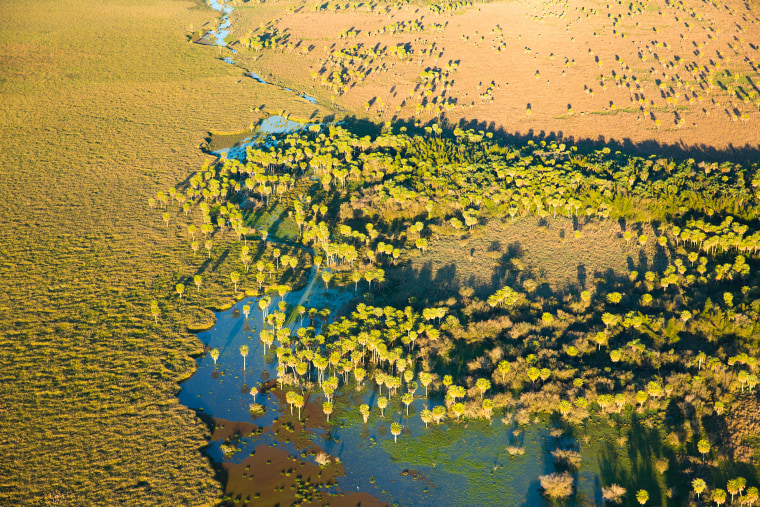 The wetlands of Ibera in Argentina.