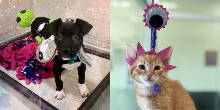 The viral posts have helped the two shelters boost their adoption rates during a busy time.