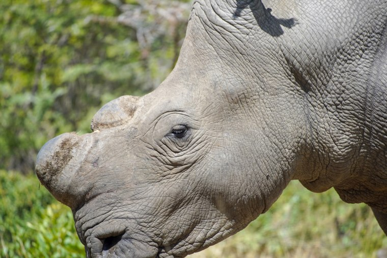 Image: Rhino