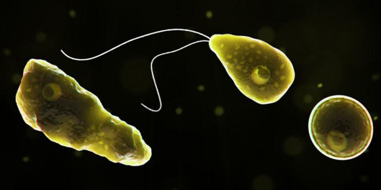 Image: Brain eating aomeba, Naegleria fowleri, parasite