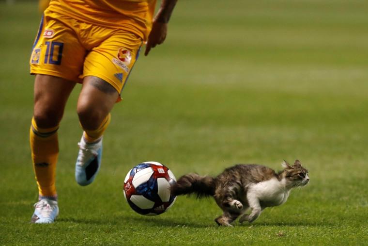 Image: MLS: Leagues Cup-Tigres UANL at Real Salt Lake