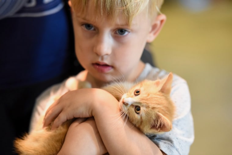 A child cuddles a kitten at Brandywine Valley SPCA in Delaware.
