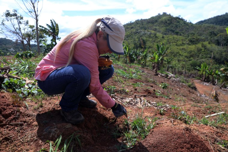 Iris Jeannette planted new coffee trees on her farm in Puerto Rico after the destruction from Hurricane Maria.