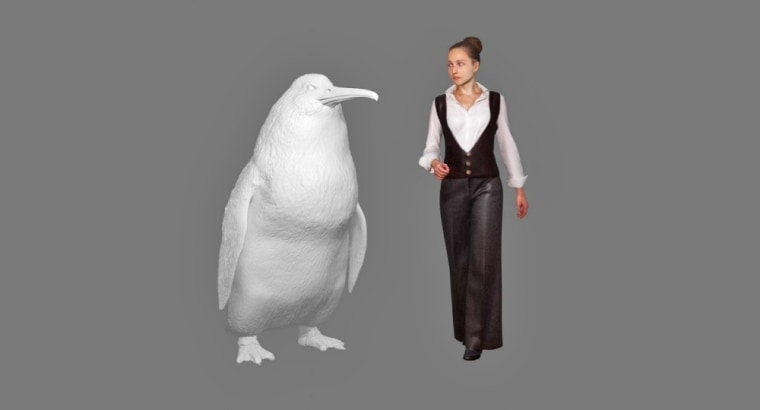 A new species of giant penguin has been identified from fossils found in New Zealand.
