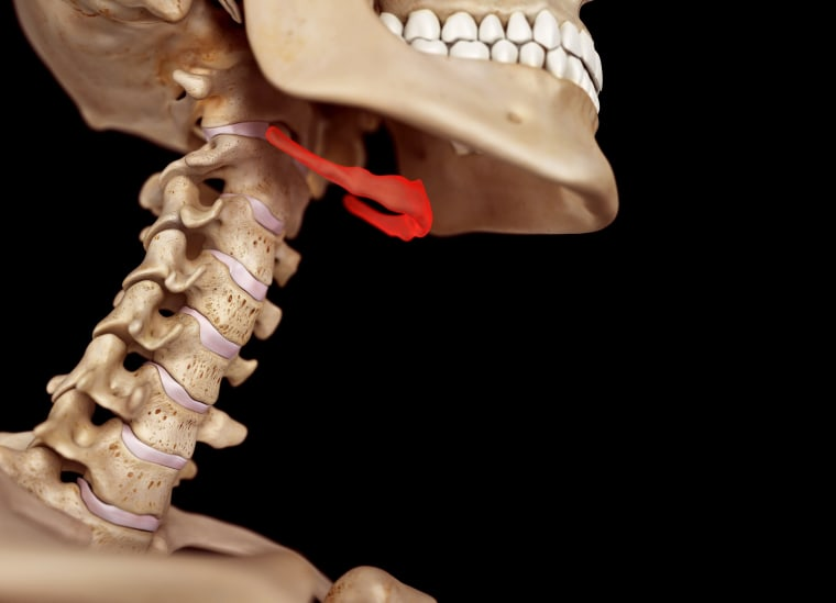 Human neck anatomy