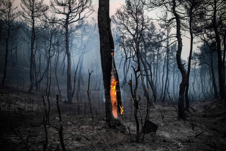 The trunk of a tree burns following a wildfire near the village of Makrimalli on the island of Evia, Greece, on Aug. 14, 2019. Hundreds of villagers were evacuated the previous day and the Greek prime minister cancelled a vacation as scores of firefighters battled a major wildfire on the country's second-largest island.