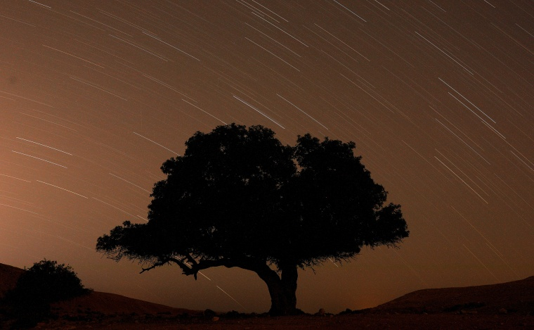 A long exposure shows stars behind a tree during the annual Perseid meteor shower near the town of Mitzpe Ramon, southern Israel, on Aug. 13, 2019.