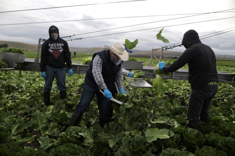 Image: Foreman Roberto Navarrete, 30, (C) supervises farmworkers with H2A visas as they harvest romaine lettuce in King City, California