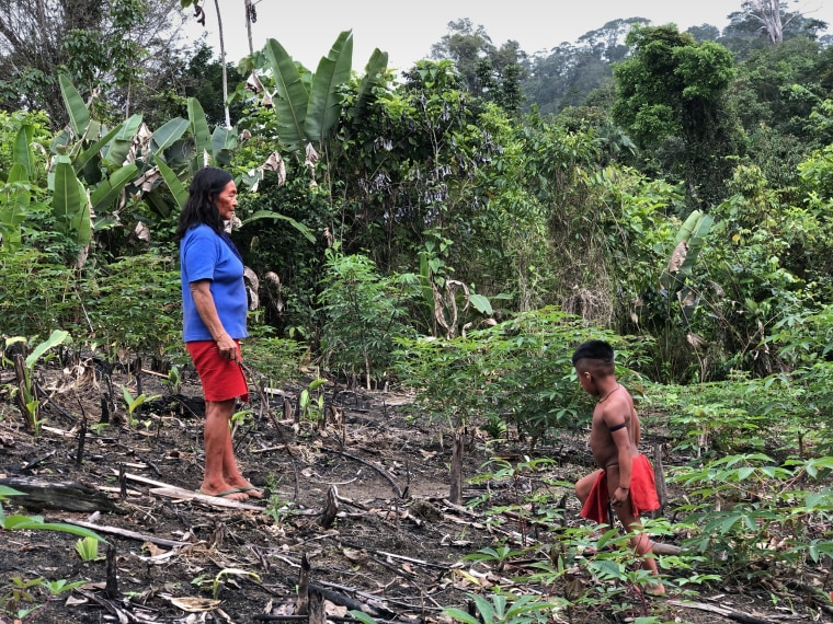 Chief Ajareaty Waiapi shows her 5-year-old grandson, Heron, around the local village plantation where cassava, bananas, peanuts and potatoes are grown.