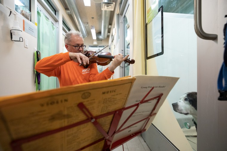Martin Agee plays his violin for a dog at the ASPCA's Animal Recovery Center in New York.