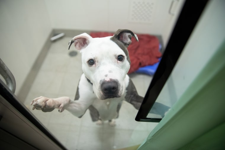 A dog greets the camera at the ASPCA's Animal Recovery Center in New York.