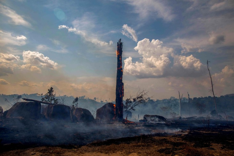 Image: A burnt portion of forest in the Amazon near Altamira, Brazil, on Aug. 27, 2019.