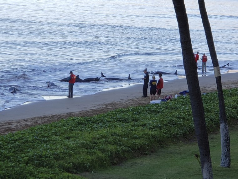 Image: Hawaii stranded whales