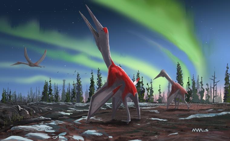 Cryodrakon boreas, from the Azhdarchid group of pterosaurs was a flying reptile which lived during the Cretaceous period around 77 million years ago.
