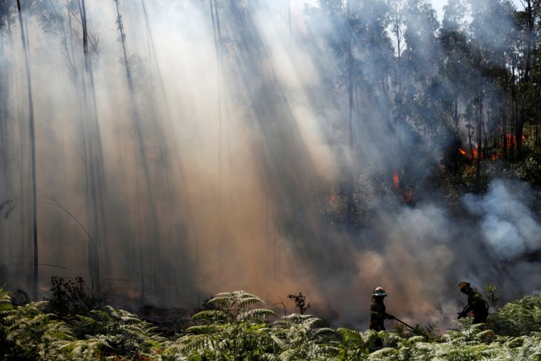 Image: Firefighters help to put out a forest fire next to A1 motorway near Fontao