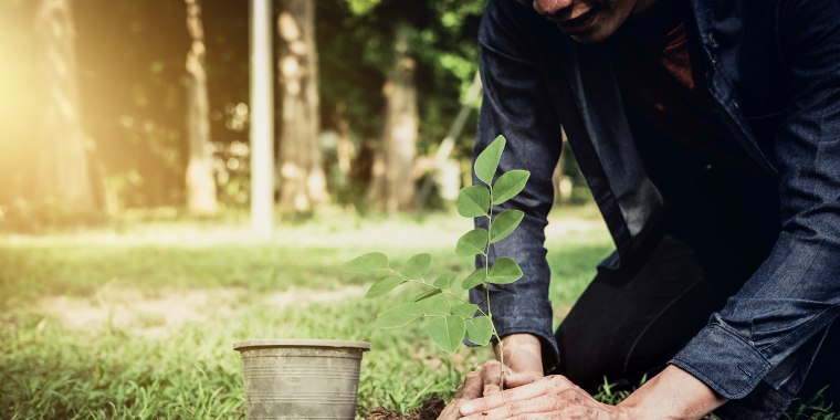 How planting trees helps combat climate change