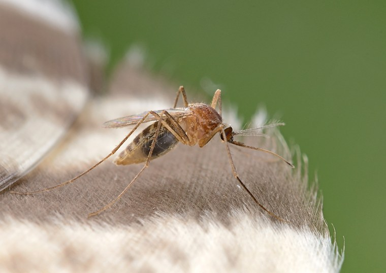Deadly mosquito virus EEE has Michigan urging people to stay indoors