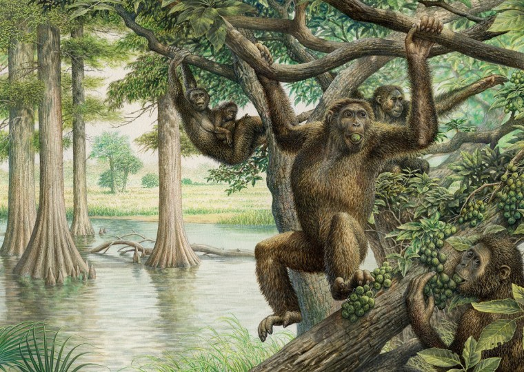 Ancient ape fossil yields surprising new insights about human evolution