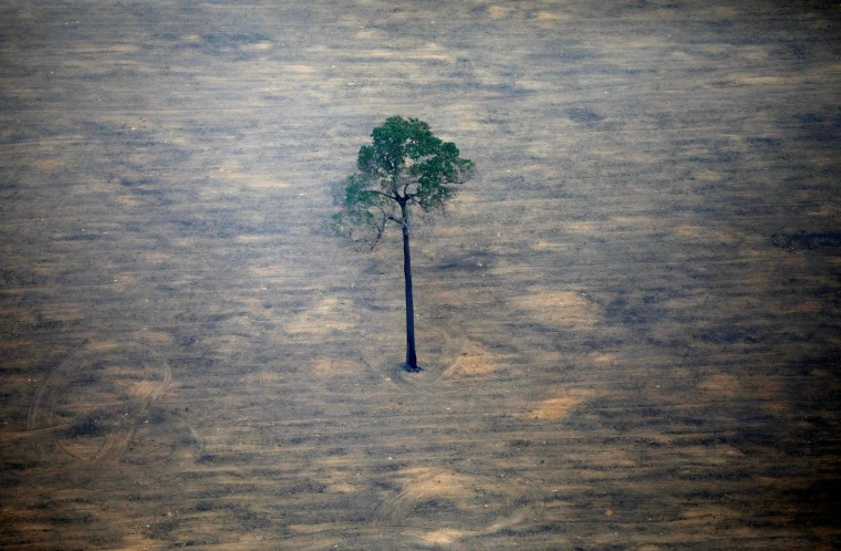 Image: An aerial view shows a deforested plot of the Amazon near Porto Velho