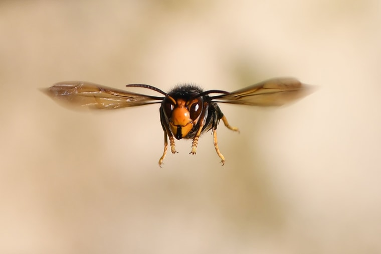 Image: TOPSHOT-FRANCE-NATURE-INSECT-FEATURE