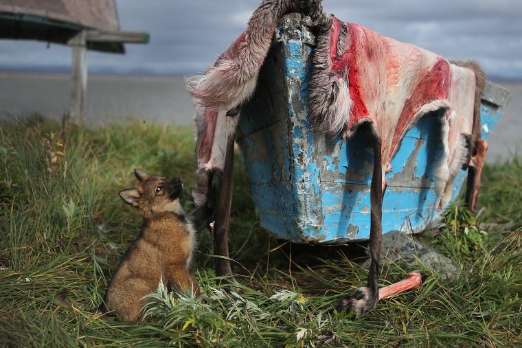 Image: Rising Sea Levels Threaten Remote Alaskan Village Of Kivalina