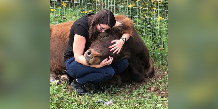 Cows have a higher body temperature than humans and their heart rate is slower, both qualities that help people relax, said farm owner Suzanne Vullers.