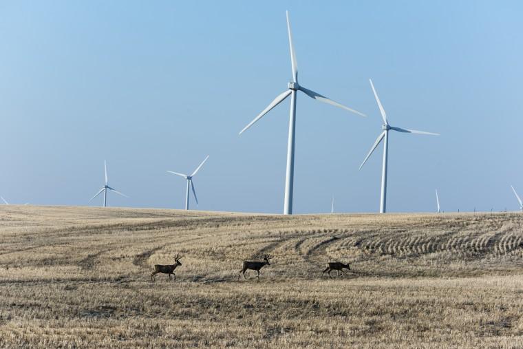 Rim Rock Wind Farm - Kevin, Montana