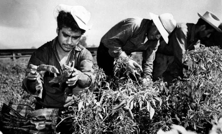 Image: Mexican migrant workers employed under the Bracero Program harvest crops in California in 1964.