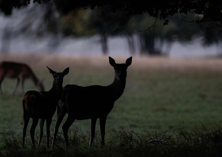 Image: Deer