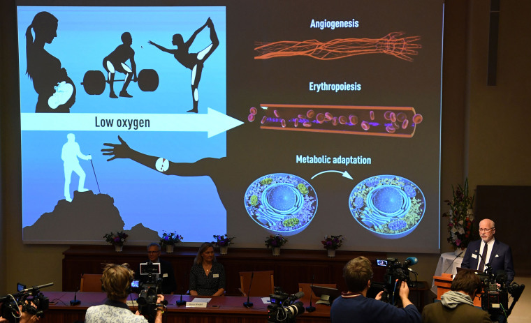 Image: Nobel Assembly member Randall Johnson explain the research field of the winners of the 2019 Nobel Prize in Medicine