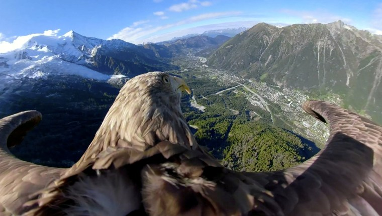 Image: Victor a nine year old white-tailed eagle equipped with a 360 camera flies over glaciers and mountains in Chamonix