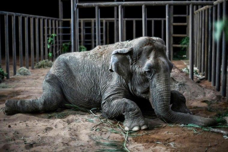 Image: TOPSHOT-BRAZIL-ELEPHANT-RESCUE