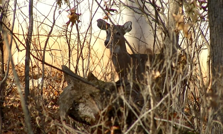 Image; Hunter dies after deer attacks him in Marion County, Ark.