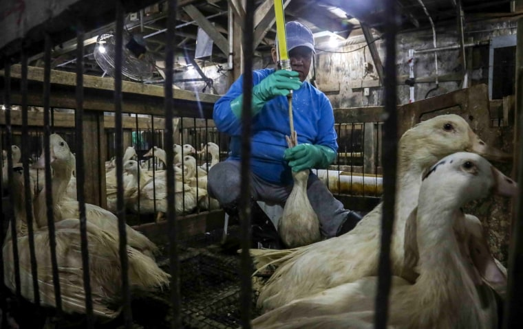 Image: Ducks are caged at the Hudson Valley Foie Gras duck farm in Ferndale, N.Y., on July 18, 2019.