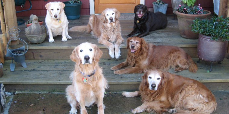 Alice Mayn, the founder of Lily's Legacy Senior Dog Sanctuary, says that dogs aged 7 and older offer distinct benefits to adopters.