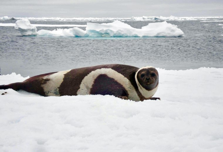 191107-ribbon-seal-al-0926_a5e5fa470f061
